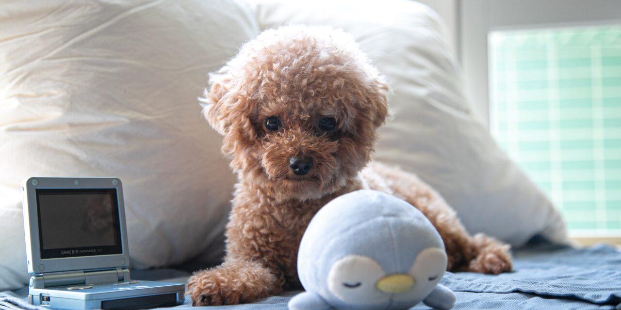 https://ilovemydogsomuch.com/wp-content/uploads/2021/03/puppy-in-house-bed-1280x640.jpg