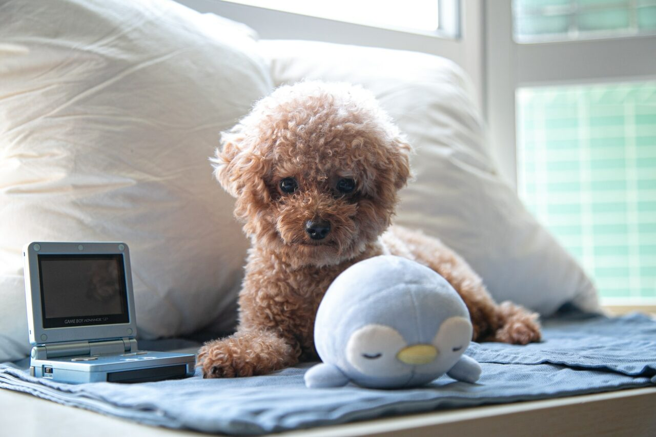 https://ilovemydogsomuch.com/wp-content/uploads/2021/03/puppy-in-house-bed-1280x853.jpg