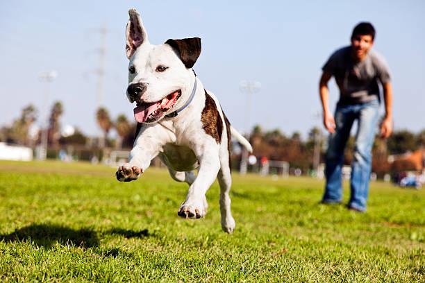 https://ilovemydogsomuch.com/wp-content/uploads/2021/03/running-dog-in-the-park.jpg