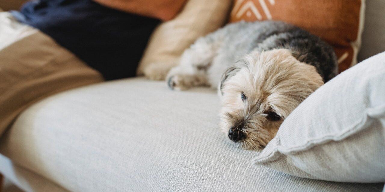 https://ilovemydogsomuch.com/wp-content/uploads/2021/03/sad-sick-dog-on-sofa-1280x640.jpg