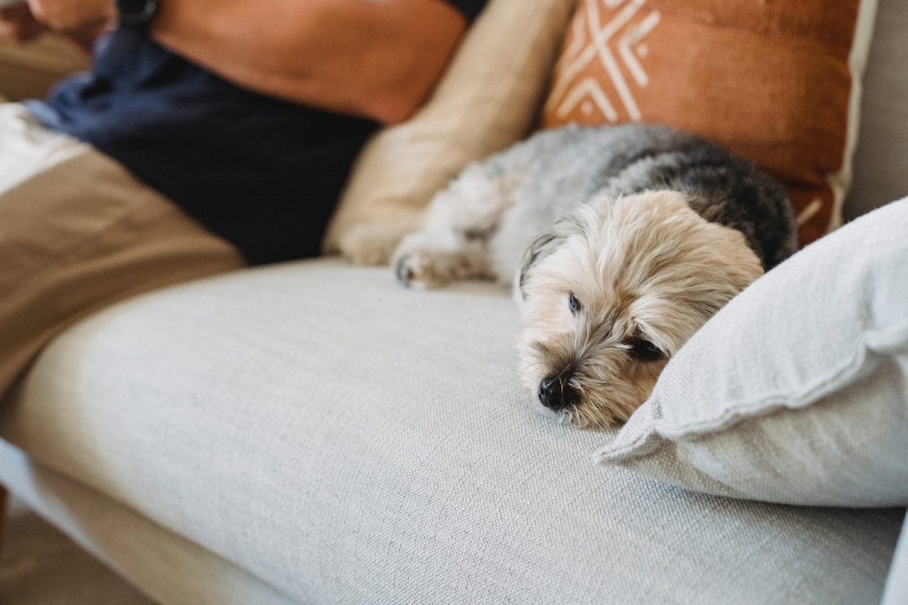https://ilovemydogsomuch.com/wp-content/uploads/2021/03/sad-sick-dog-on-sofa.jpg