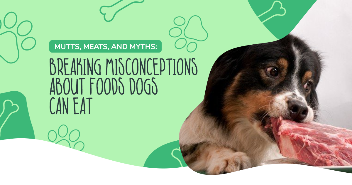 Mutts, Meats, and Myths: Breaking Misconceptions About Foods Dogs Can Eat