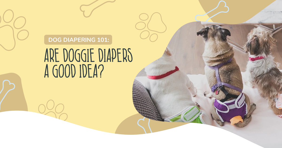 Dog Diapering 101: Are Doggie Diapers a Good Idea?