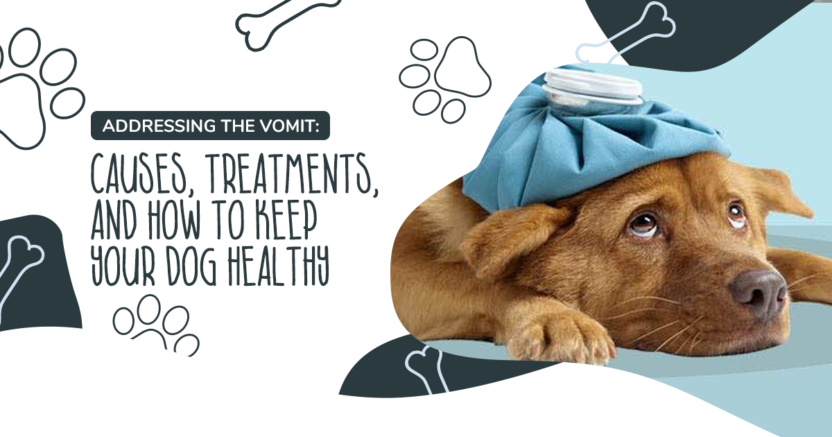 https://ilovemydogsomuch.com/wp-content/uploads/2021/04/Article-63-vomit-and-how-to-keep-your-dog-healthy.png