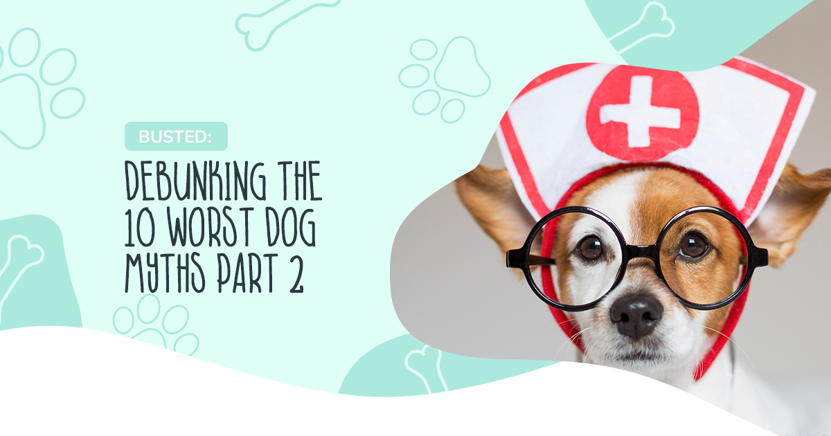 Busted: Debunking The 10 Worst Dog Myths Part 2