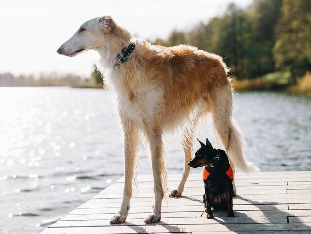 Small and big dog 2