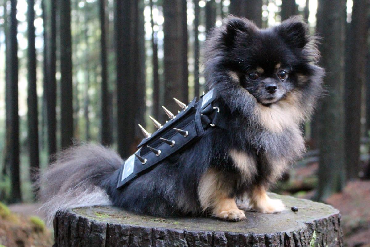 https://ilovemydogsomuch.com/wp-content/uploads/2021/04/badass-dog.jpg