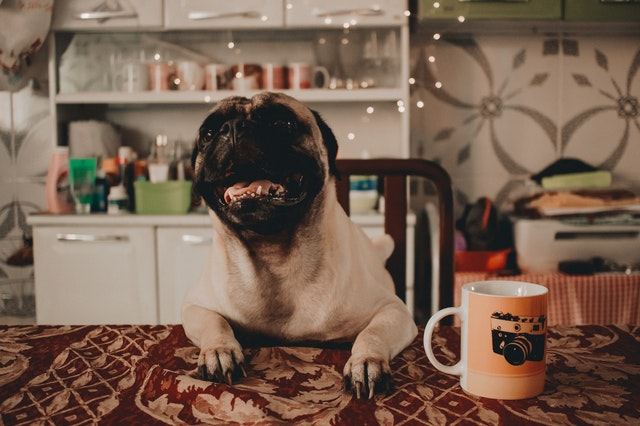 dog on table with coffee
