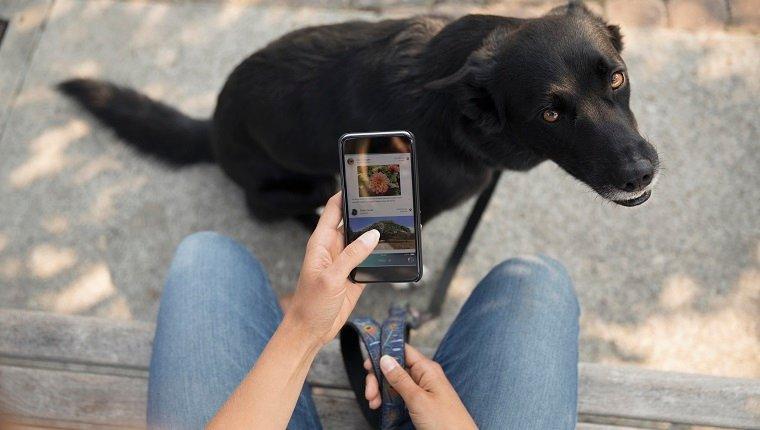 https://ilovemydogsomuch.com/wp-content/uploads/2021/04/dog-phone-apps.jpg