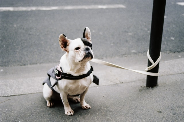 dog walking 101 leashes