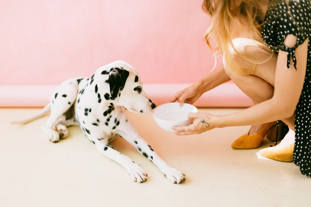 how to keep your dog healthy treatment