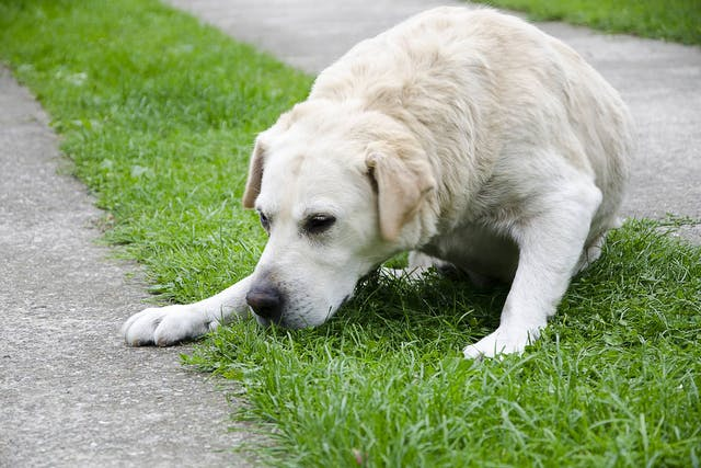 how to keep your dog healthy vomit