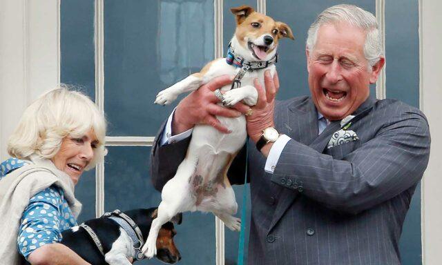 royal dog owners duke and duchess of cornwall