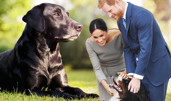 royal dog owners meghan and harry