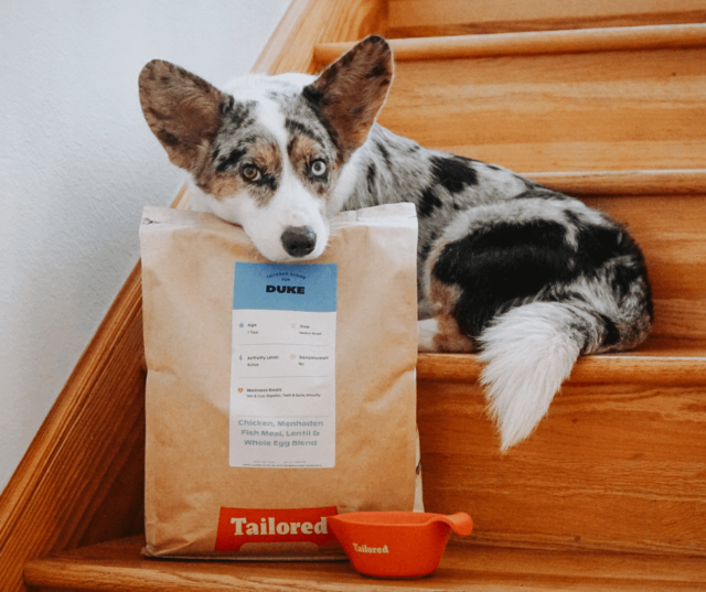 tailored dog food 1
