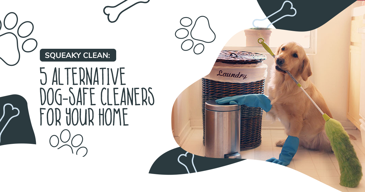 Squeaky Clean: 5 Alternative Dog-Safe Cleaners For Your Home