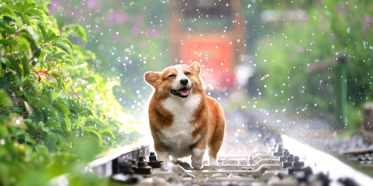 https://ilovemydogsomuch.com/wp-content/uploads/2021/05/Corgi_Dog-Related-Words-1280x640.jpg