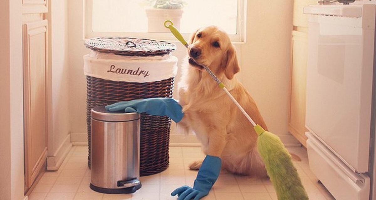 https://ilovemydogsomuch.com/wp-content/uploads/2021/05/Dog-Safe-Cleaners-1-1200x640.jpg