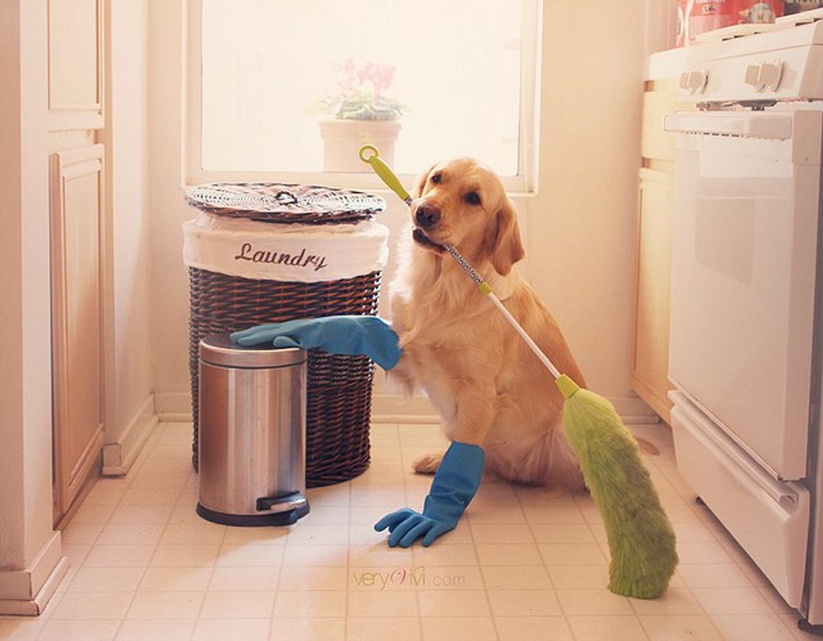 https://ilovemydogsomuch.com/wp-content/uploads/2021/05/Dog-Safe-Cleaners-1.jpg