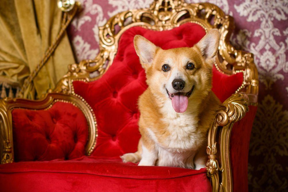 https://ilovemydogsomuch.com/wp-content/uploads/2021/05/Most-Popular-Royal-Dog-Breeds.jpg