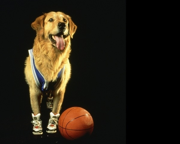 air bud buddy famous celebrity dogs