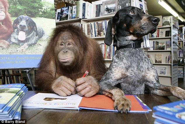 animal welfare act ape and dog