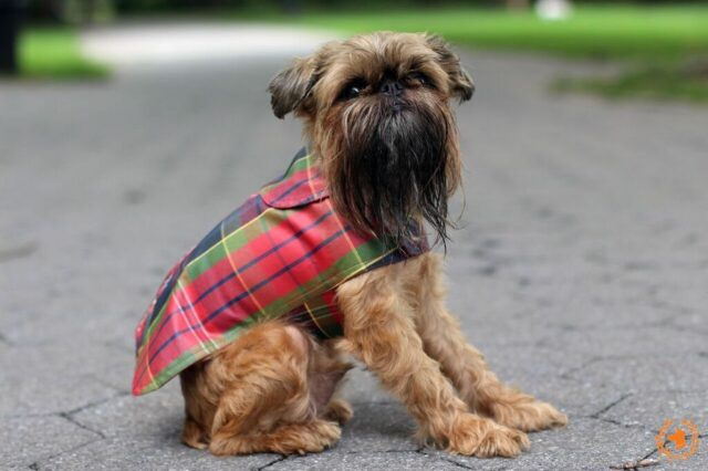 best dog clothing brands 1