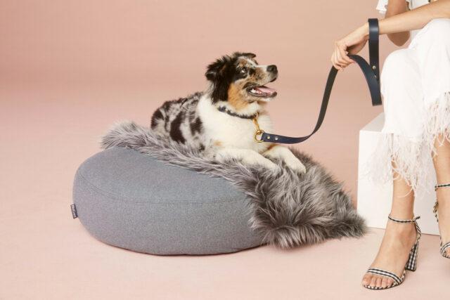 best dog clothing brands furry modern