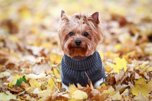 best dog clothing brands dog in knit