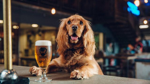 brewdog dog beer dangerous items for dogs