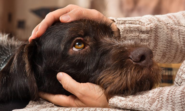 https://ilovemydogsomuch.com/wp-content/uploads/2021/05/canine-distemper.jpg