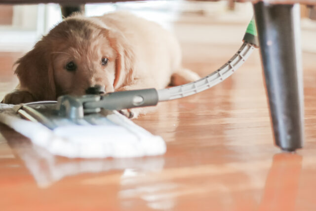 cleaning dog safety