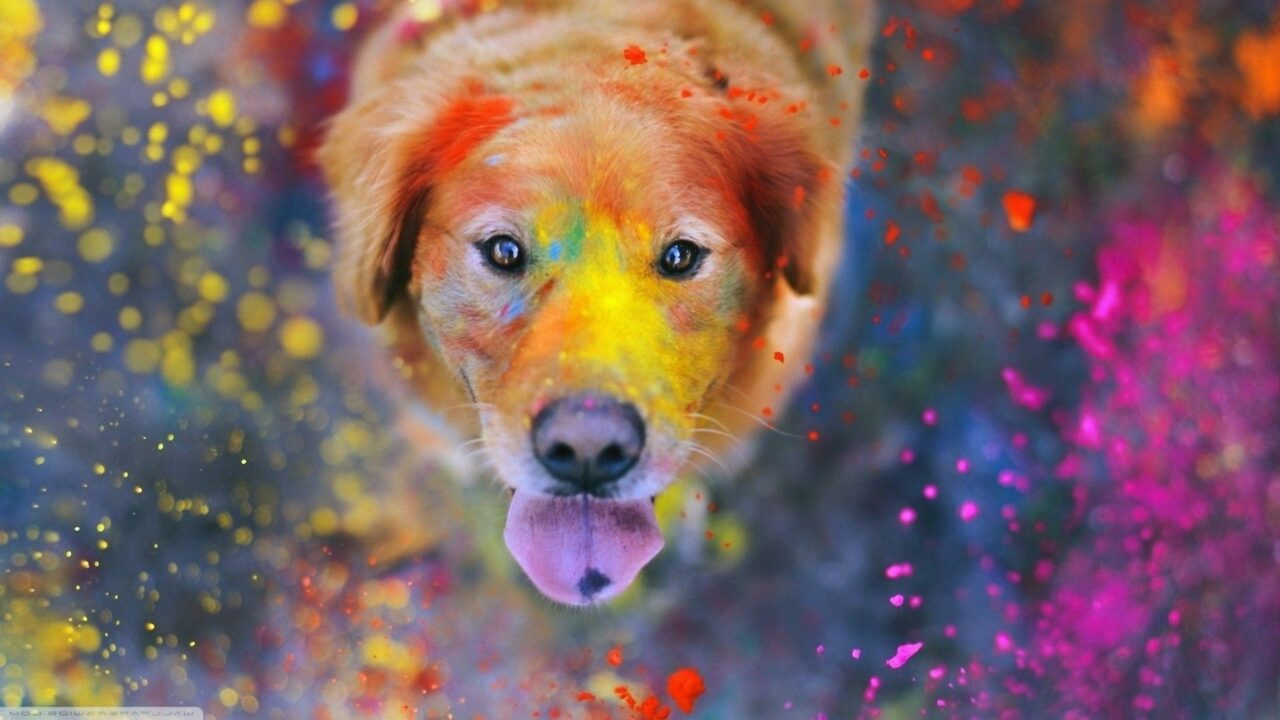 https://ilovemydogsomuch.com/wp-content/uploads/2021/05/colourful-dog-1280x720.jpg