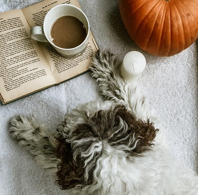 dangerous items for dogs coffee