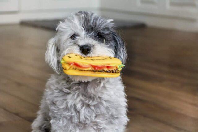 dangerous items for dogs plastic toys