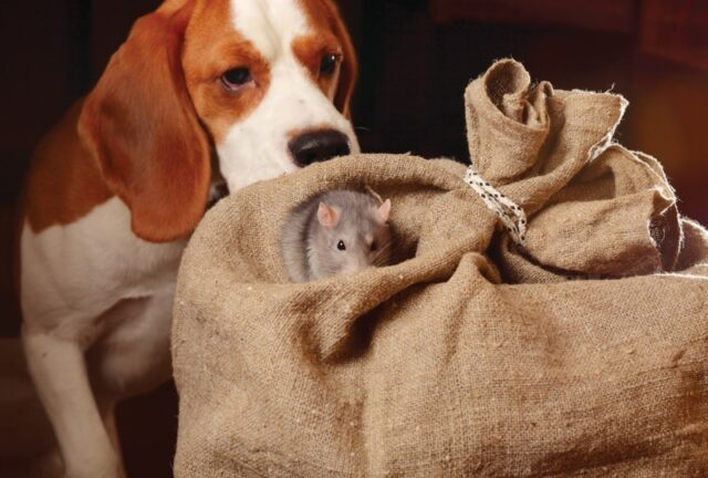 dangerous items for dogs rodenticides