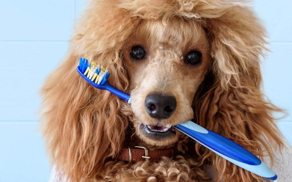https://ilovemydogsomuch.com/wp-content/uploads/2021/05/dog-brushing-teeth-1024x640.jpg