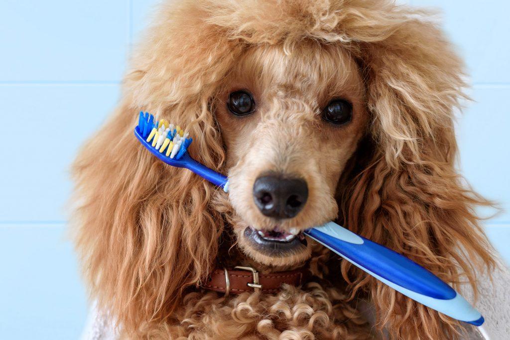 https://ilovemydogsomuch.com/wp-content/uploads/2021/05/dog-brushing-teeth.jpg