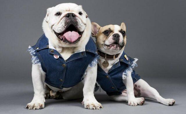 dog clothing brands Pethaus