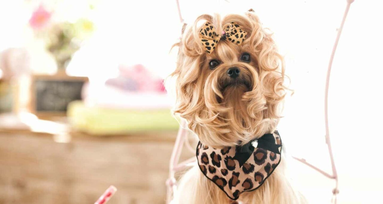 https://ilovemydogsomuch.com/wp-content/uploads/2021/05/dog-fashion-1280x684.jpg
