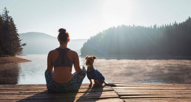 dog health and wellness