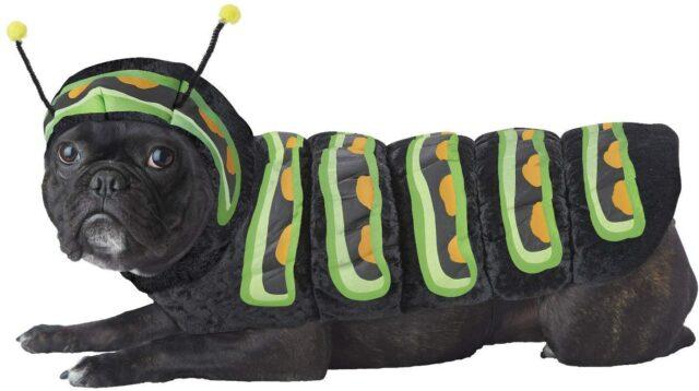 dog related words caterpillar