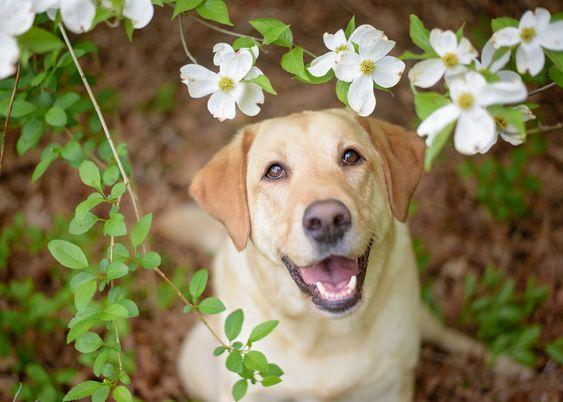 dog related words dogwood
