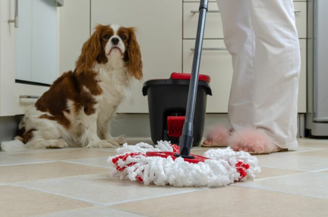 dog safe cleaners
