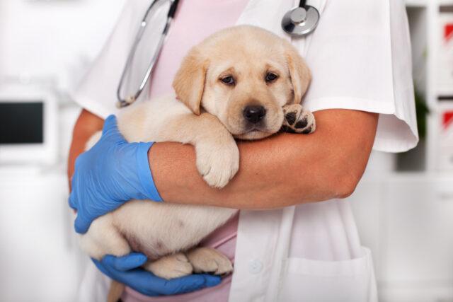 dog vaccines 1