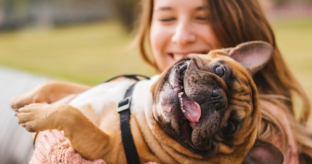 https://ilovemydogsomuch.com/wp-content/uploads/2021/05/dog-welfare.jpg