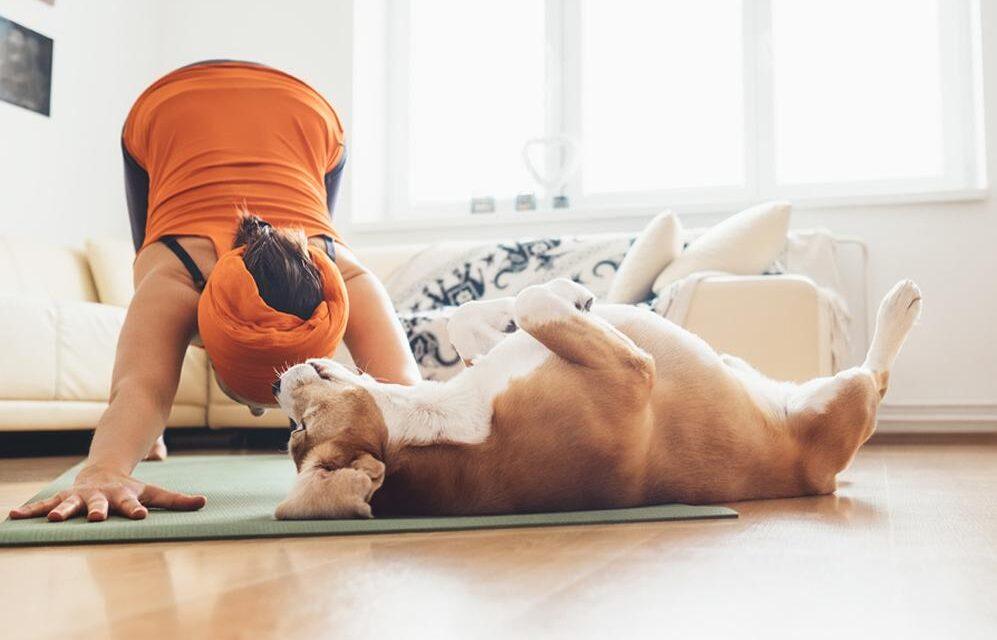 https://ilovemydogsomuch.com/wp-content/uploads/2021/05/dog-yoga-1-997x640.jpg