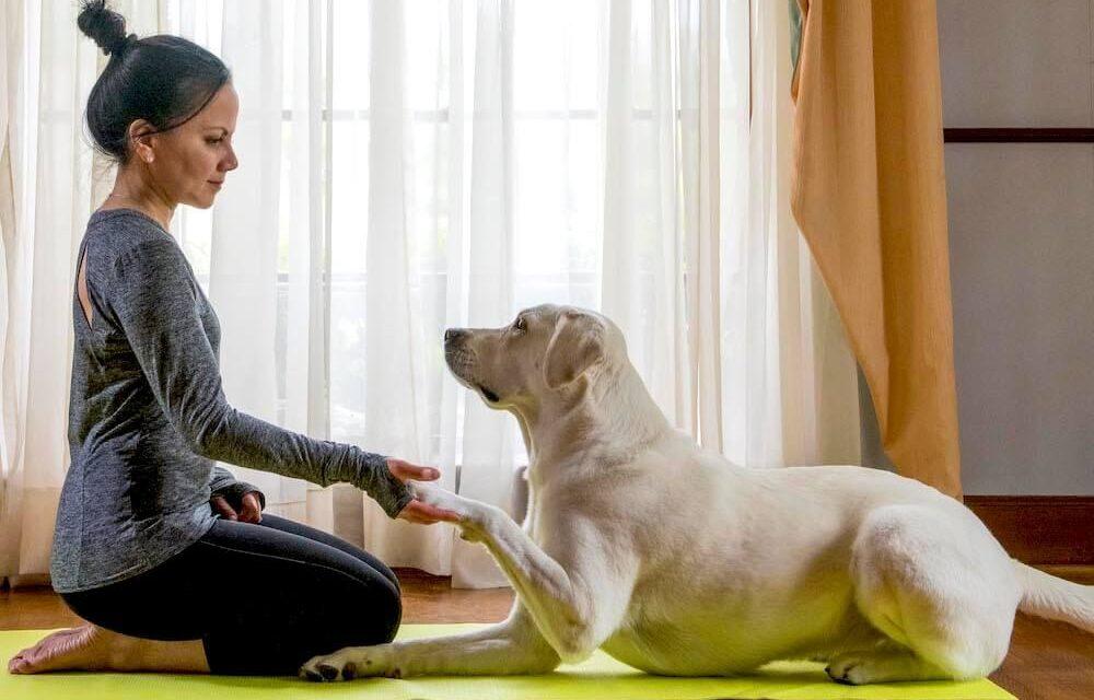 https://ilovemydogsomuch.com/wp-content/uploads/2021/05/dog-yoga-1000x640.jpg
