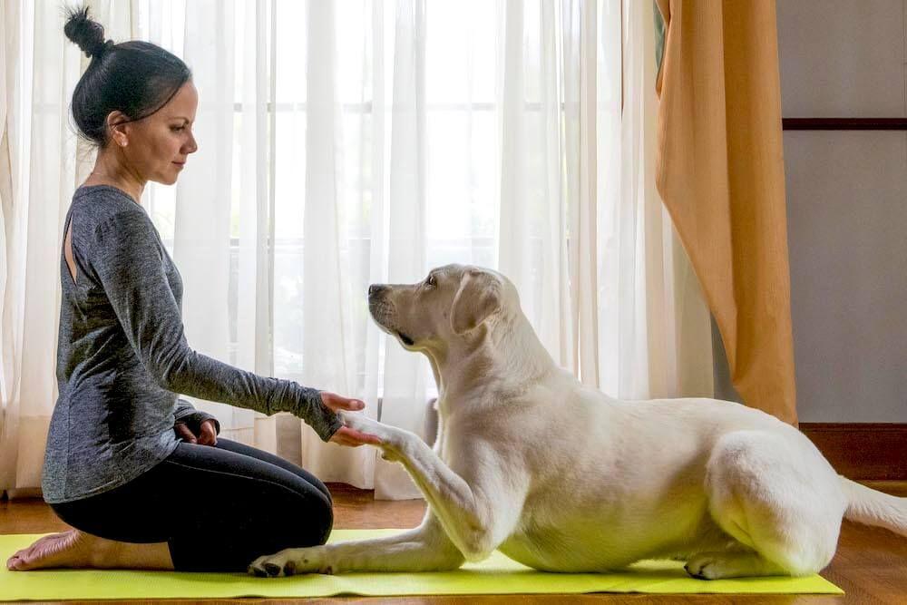 https://ilovemydogsomuch.com/wp-content/uploads/2021/05/dog-yoga.jpg