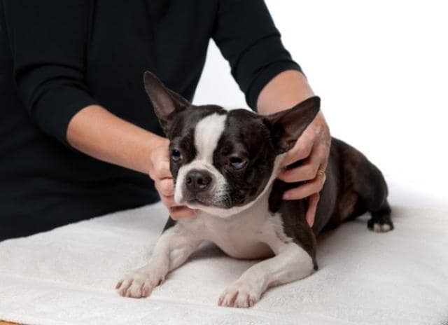 doggy date night massage